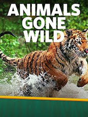 Animals Gone Wild Compilations