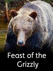Feast Of The Grizzly