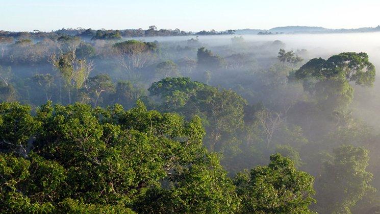 Amazon Rainforest Special